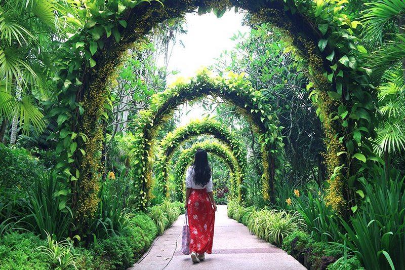 Oc-dao-xanh-Singapore-Botanic-Gardens