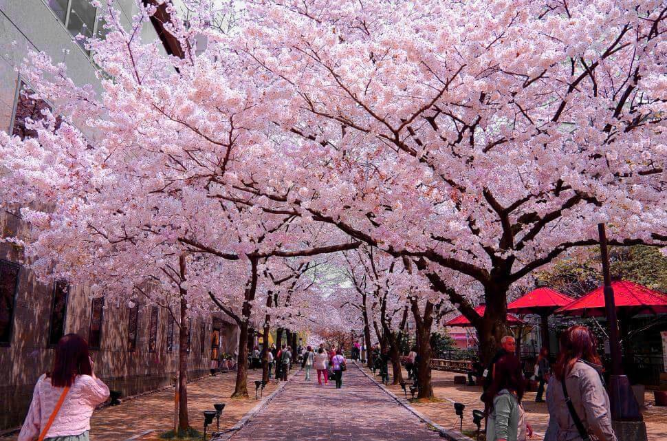Trải Nghiệm Du Lịch Nhật Bản Tết Nguyên Đán Năm 2020