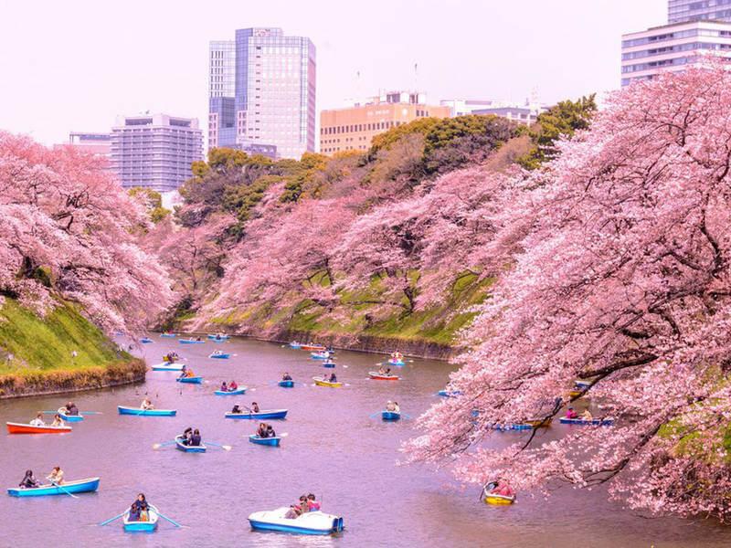 Du Lịch Nhật Bản Tháng 7 Mùa Hạ Điểm có gì hấp dẫn
