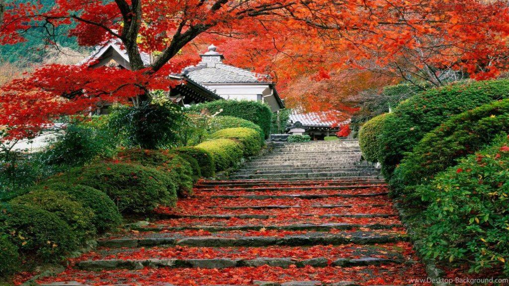 Vẻ đẹp mùa thu ở đất nước Nhật Bản.