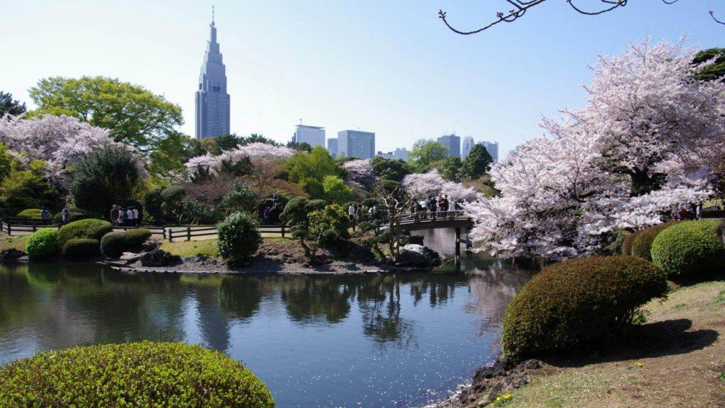 Ngắm mùa hoa anh đào đẹp nhất ở công viên Shinjuku Gyoen
