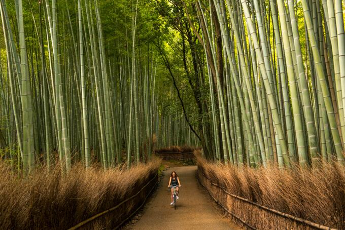 Rừng tre Arashiyama.