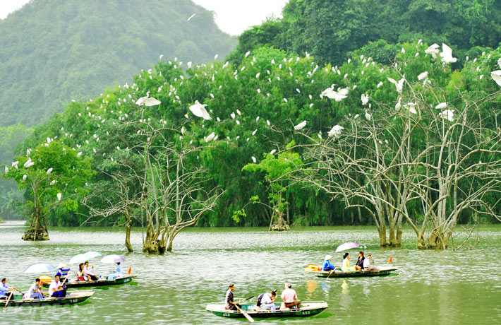 Tourists-are-excited-with-many-birds-in-Thung-Nham-bird-garden
